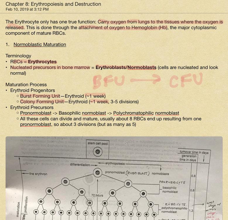 40402398-1227-4EBA-96E8-FD096D079CDD.thumb.jpeg.6bf1811e38efc422b7cf21441365c55e.jpeg